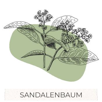 drzewo-sandalowe